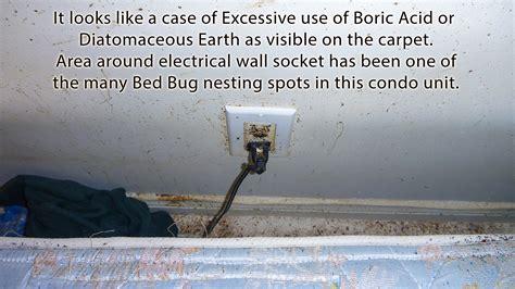 worst bed bug infestation the worst case of bed bug infestation quest pest