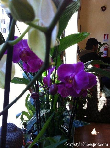 fiori di frangipane lilawadee il fiore di frangipane paperblog