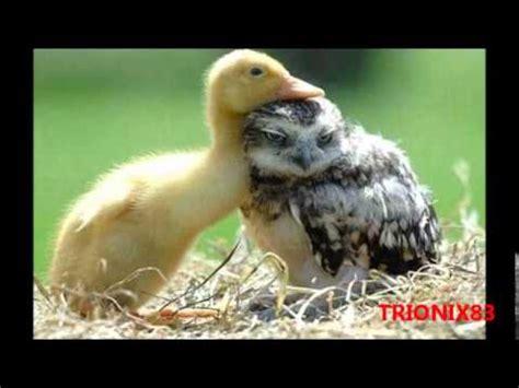 imagenes increibles de animales raros animales extra 241 os extra 241 as parejas de animales amistades