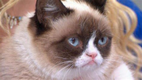 cat voice plaza to voice grumpy cat in lifetime s