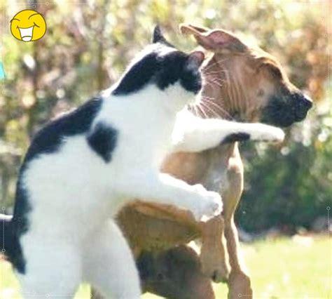 kucing  anjing gambar lucu  unik