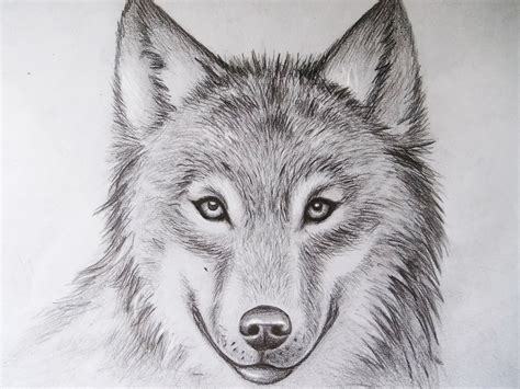 Animal Pencil cool drawings of animals drawings of animals twenty