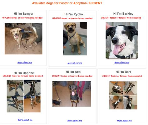 rescue dogs match viral photo of sad puts focus on foster pets
