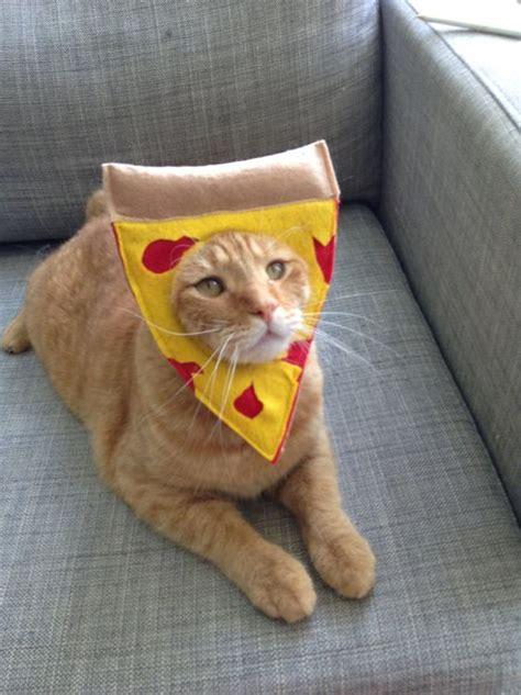 cat costumes  halloween