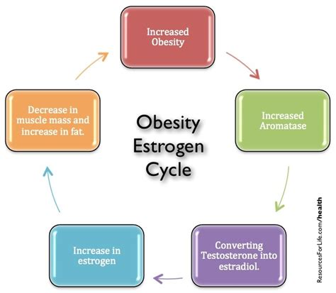 Iodine Detox Estrogen by Obesity And High Estrogen Levels In Symptoms Causes