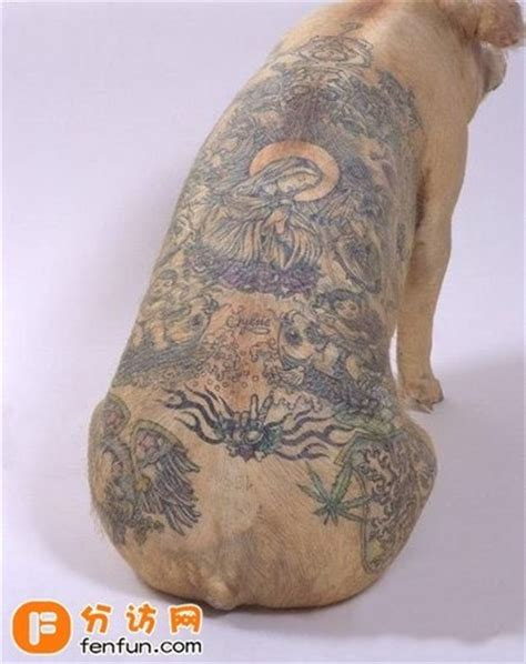 罗志祥纹身图 罗志祥纹身 罗志祥纹身图案图片