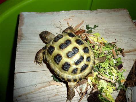 imagenes de animales reciclados excrementos de animales dom 233 sticos ideales para las