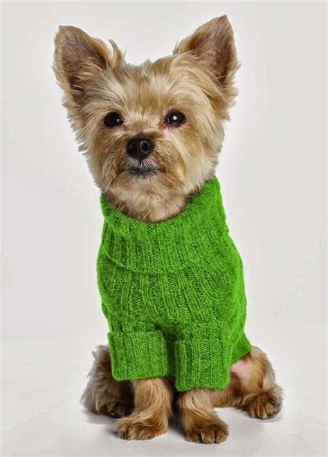 Jo In Clothes For Pets S top 887 ideas about pet fashion show on