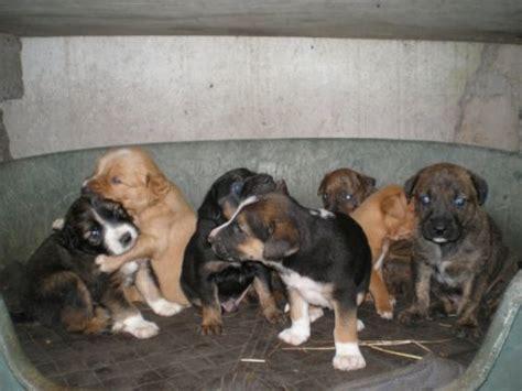 fino a quanti mesi cucciolissimi org cucciolissimi ostia rm tanti cuccioli