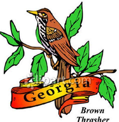 georgia state bird clipart