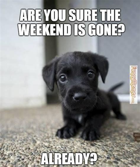 Weekend Dog Meme - 38 best bank holiday weekend quotes images on pinterest