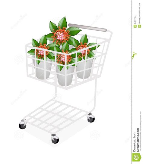 garden decoration shopping fresh ixora flowers in a shopping cart stock images