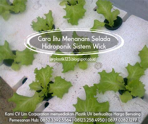 Harga Plastik Uv Untuk Hidroponik cara jitu menanam selada hidroponik sistem wick pabrik