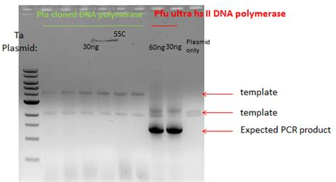 pcr product as template why am i getting pcr product of the size of my template