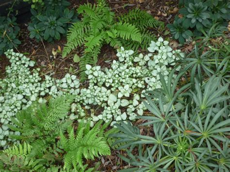 planting scheme for woodland style garden traditional