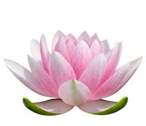 Lotus Flower Hinduism