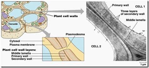 Lu Dinding dekablog struktur sel