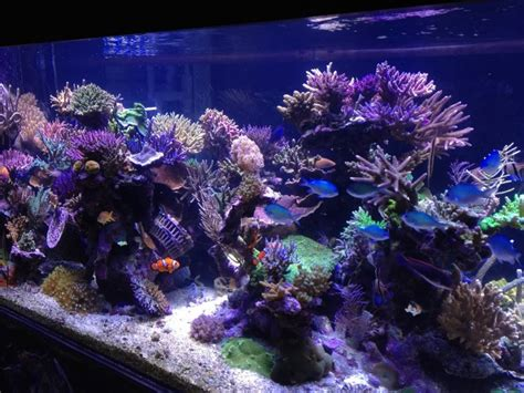 Lu Led Aquarium 2015 1300 gallon tank suffered a catastrophic failure orphek