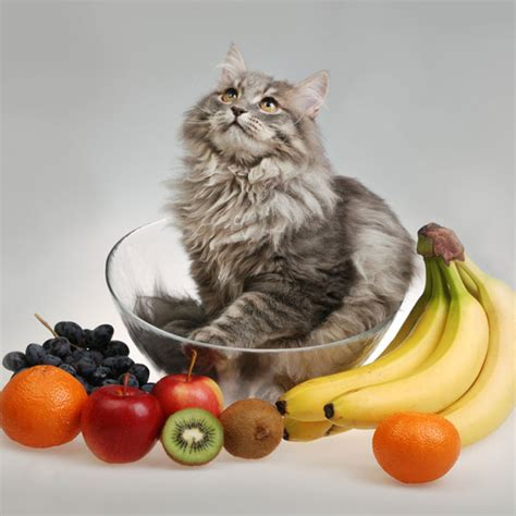 is pineapple ok for dogs can cats eat pineapple leaves cats