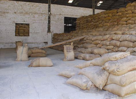 Minyak Castor Castor projek tanaman castor
