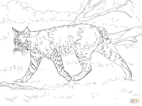 coloring pages of bobcats realistic bobcat coloring page free printable coloring pages