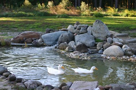backyard duck ponds 17 best images about duck ponds on pinterest gardens
