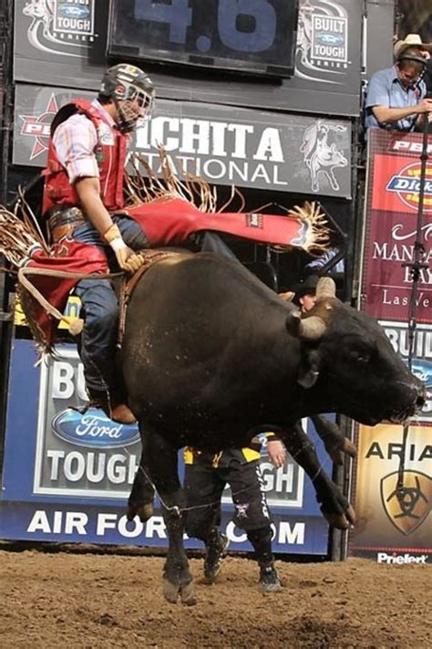 madison square garden  rodeo hosts professional bull
