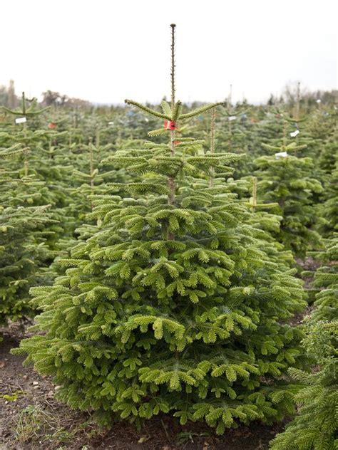 home jakins christmas trees