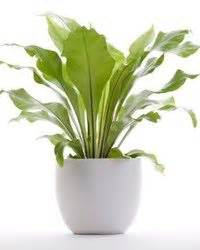 desk plants that don t need sunlight 1000 images about indoor plants on houseplant