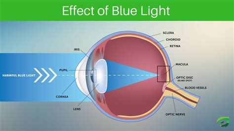 blue light effect on eyes top 5 andriod and windows eye protection apps express