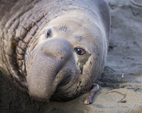 marine mammals flickr