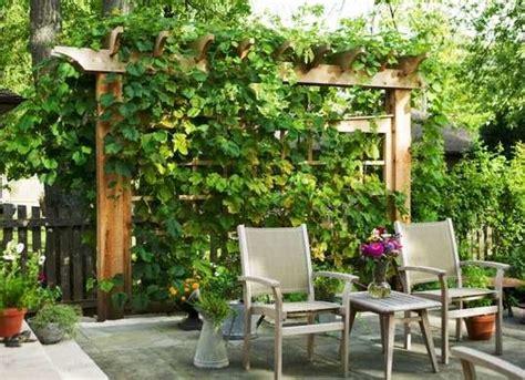 ways to get privacy in backyard trellis ideas backyard privacy ideas 11 ways to add