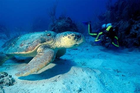 dive holidays st lucia scuba diving holidays with sportif dive holidays
