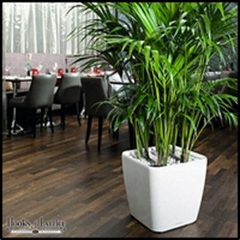 modern indoor planters self watering indoor planters modern indoor planters self watering indoor planters