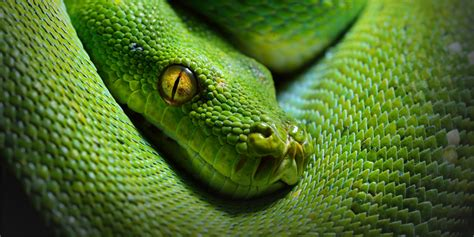 Animal World Snakes snakes national geographic