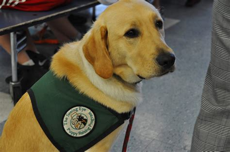 seeing eye dogs milo makes 14 seeing eye dogs trained at cedar hill