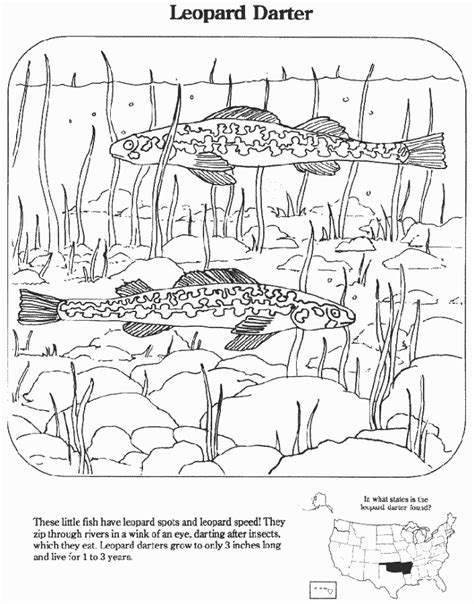 coloring pages extinct animals leopard darter education coloring pages endangered