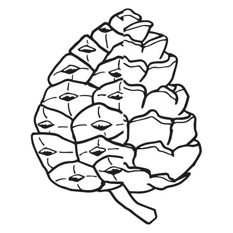 Pine Cone Coloring Page