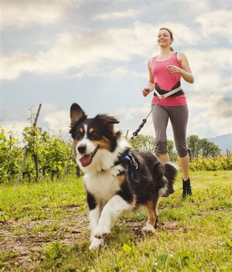 do puppies miss their mothers 6 best exercises to do with your dogs tips advice me