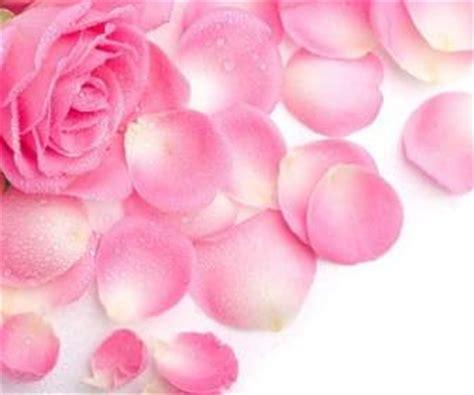Renda Rumput Merah Rln 024 renda kelopak mawar merah stock photo merah gratis foto gratis
