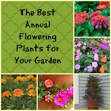 the best annual flowering plants for your garden hubpages