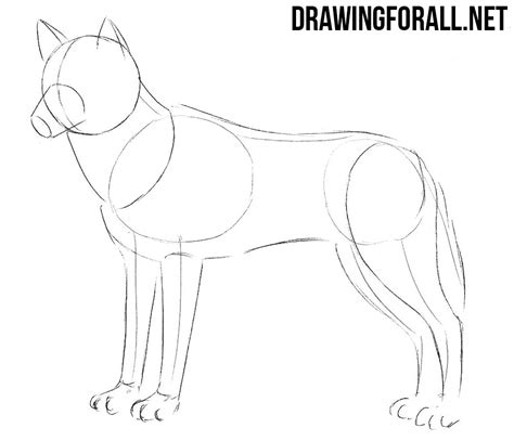 how to a wolf how to draw a wolf drawingforall net