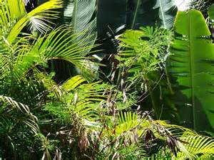 tropical plant species 301 moved permanently