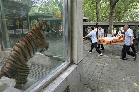 imagenes chidas raras 22 fotos entre las m 225 s extra 241 as e inexplicables el gato