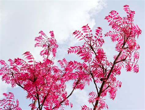 free stock photos rgbstock free stock images pink leaves micromoth april 27 2014 19