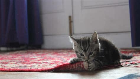 why does cat on the carpet carpet vidalondon