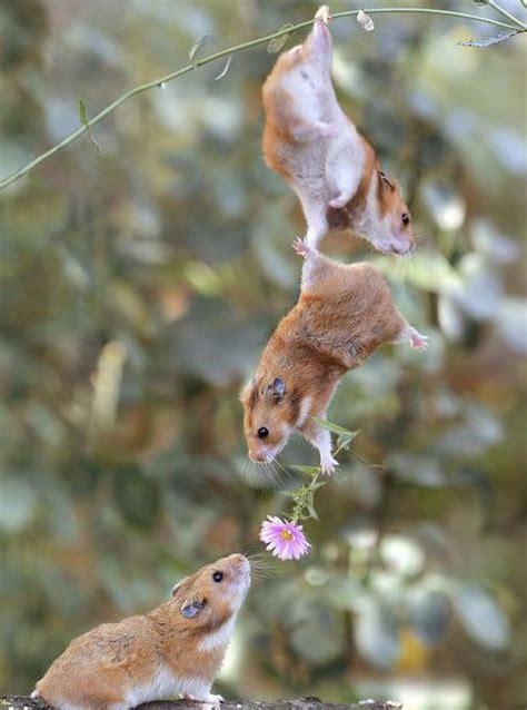 imagenes comicas muy graciosas fotos graciosas de animales muy buenas taringa