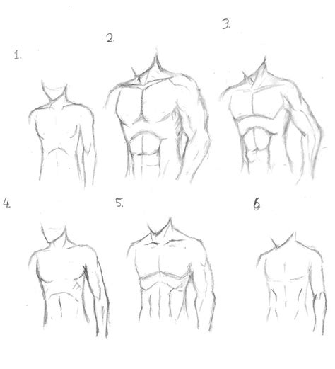 how to draw muscles anime anatomy drawing images
