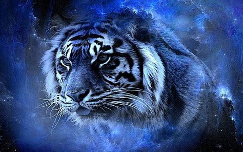 black background tiger