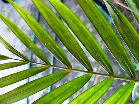 enfermedades de las plantas de interior enfermedades comunes de las plantas plantas ornamentales